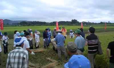 稲刈りツアー