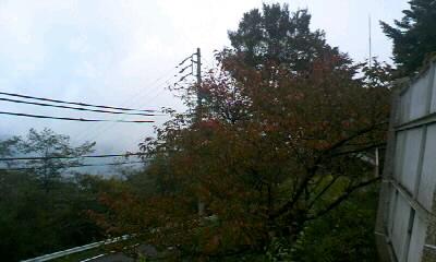 井川の紅葉