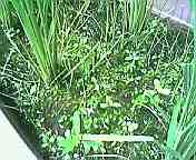 雑草生い茂り